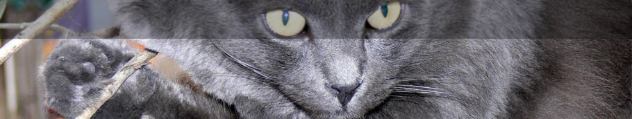 Katzenpension Nadine
