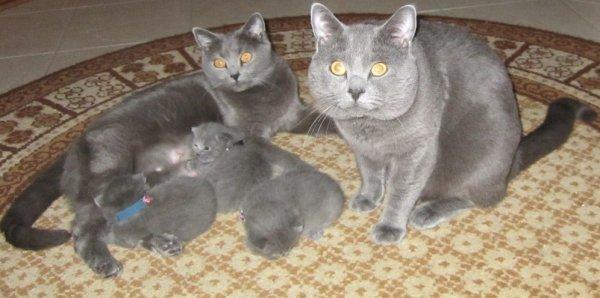 Familie Marie Samba